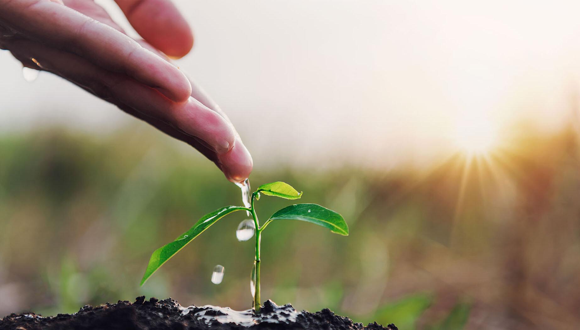 BesenRein kümmert sich um eine professionelle Gartenpflege im Frühling, bereitet Ihre Beete vor und bringt Ihren Garten wieder zum Strahlen.